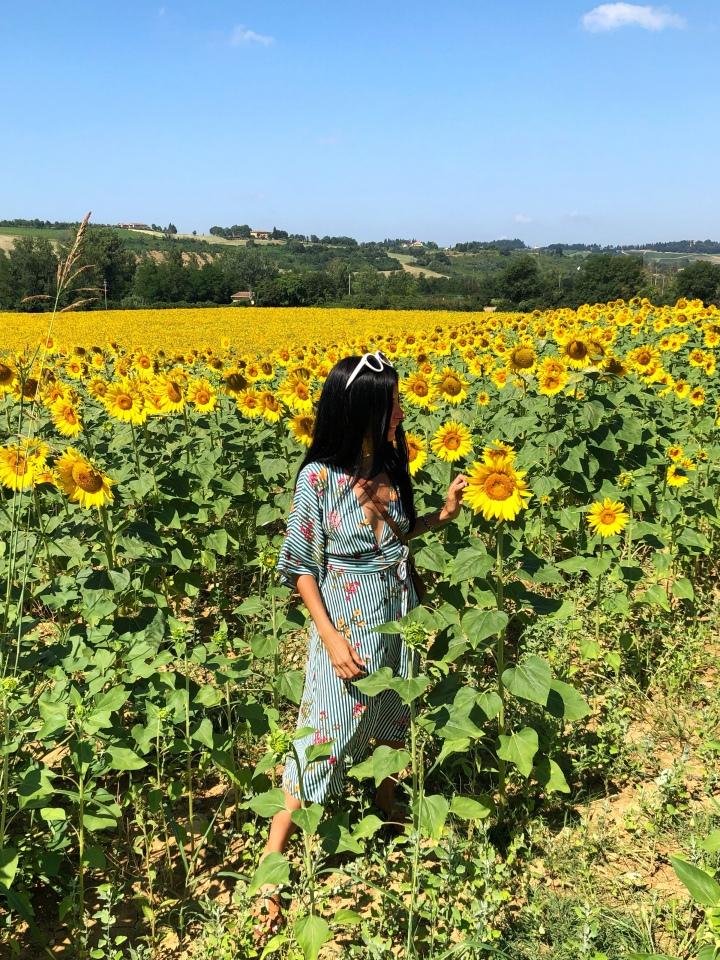 Sunflowers in Tuscany | Girasoles enToscana
